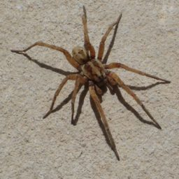 Уничтожение пауков в Магнитогорске